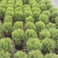 Фирма Плантика търси да назначи озеленители