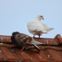 Почистване на покриви, улуци, комини-Хамалски услуги- кърти, чисти, за Русе и региона